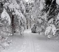 snow covered trail for cc skiing